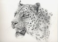Leopard by sschukina on DeviantArt Horror Drawing, Cat Drawing, Animal Drawings, Pencil Drawings, Lion Sketch, Cat Coloring Page, Graphite Drawings, Cat Tattoo, Wildlife Art
