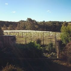 Coming home to this view. Can life get any better? #wine #Tasmania #loving_it