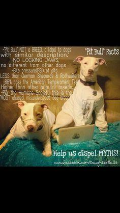 pitbull #pitbullfacts More