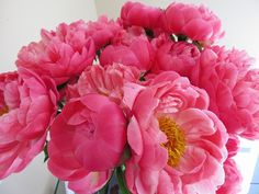 Coral Charm - Peonies - Flowers and Fillers - Flowers by category | Sierra Flower Finder