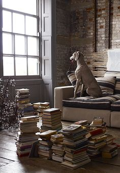 Love Weimaraner - and everything in this picture. I'm lucky enough to have my own Weimaraner. Dog Books, Beautiful Dogs, Dog Owners, Dog Life, Dogs And Puppies, Doggies, Weimaraner Puppies, Book Lovers, Puppy Love