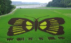 These Japanese Crop Circles Are Beyond Impressive - Rice Paddy Art | Guff
