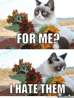 Grumpy Cat and Flowers