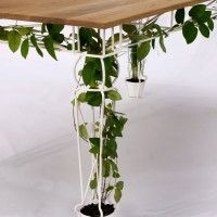 Awesome! Creeping vine planted into the table legs! Brilliant!