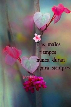 Buen@s saludos Faith Quotes, Words Quotes, Wise Words, Life Quotes, Journey Quotes, Encouragement Quotes, Positive Vibes, Positive Quotes, Quotes En Espanol