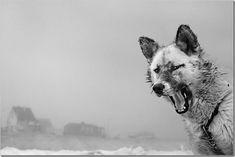 © Ragnar Axelsson   Ragnar Axelssones un fotógrafo islandés (nacido en Islandia en 1958) que ha ha dedicado su carrera a documentar la subsistencia de cazadores, pescadores y agricultores de la zona circumpolar que viven en la periferia del mundo habitable.