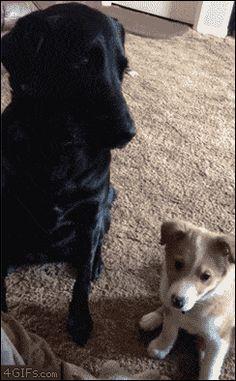 Porque los perritos también son lindos :3