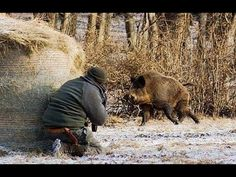 Hunting for wild boar excellent shots. collection of hunting moments - YouTube