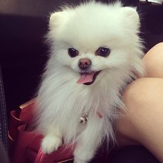 This Pin was discovered by ZoeDoggy of Beverly Hills. Discover (and save!) your own Pins on Pinterest.