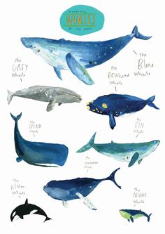 Wonderful Whales of the World. Limited Edition Print by Faye Bradley