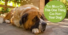 Distemper vaccination info, once is enough http://www.dogsnaturallymagazine.com/vet-distemper-dog/?utm_campaign=coschedule&utm_source=facebook_page&utm_medium=Dogs%20Naturally%20Magazine