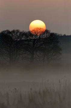 scenery solo sun tree dawn mystical