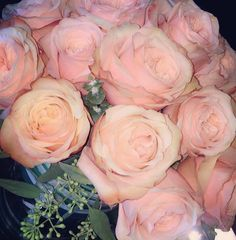 Rose Rose Rose  how prefect are these