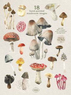 Mushroom Watercolor Clipart Set #elements#forest#element#bonus