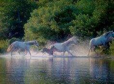 Current River Wild Horses....Shannon County Missouri