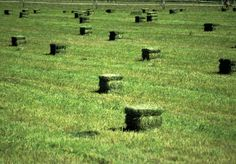 square baled hay in field, just seeing the picture still makes me sweat! I want to mow a field, it's on my Bucket list.