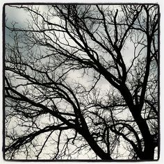 Branches at Dusk.