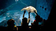 Virginia Aquarium & Marine Science Center Virginia Beach