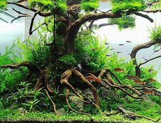 New Great Grafities: AGA 2010 Aquascaping Contest