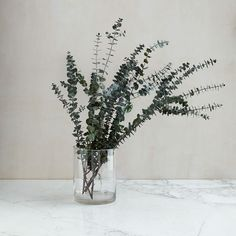 Shop eucalyptus from west elm. Find a wide selection of furniture and decor options that will suit your tastes, including a variety of eucalyptus. Faux Plants, Indoor Plants, Faux Flowers, Dried Flowers, Silk Flowers, West Elm, Dried Eucalyptus, Eucalyptus Branches, Eucalyptus Bouquet