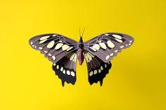 #Paper #Artist #Sculptor #colour #composition #botanical #natural #history #3D #art #flowers #bird #animal #butterfly #jsrartist