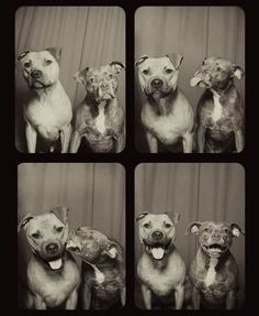 See what happens when you put dogs in a photo booth. Aren't they adorable? :-)
