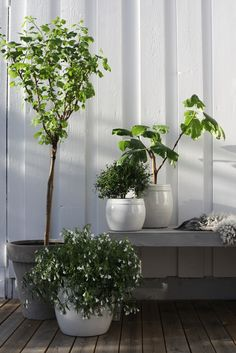 Love this plant styling.