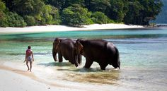 Wade With The #Elephants at #Radhanagar Beach #Exotic #Destinations #India