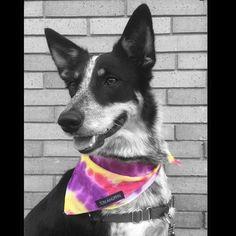 Dog Clothing & Shoes Flamingo Pattern Dog Bib Dog Saliva Towel Feeding Triangular Cartoon Premium Cotton Bandage Towel For Animals Cats Pets