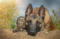 Такая милая дружба пса и совушки   Чёрт побери
