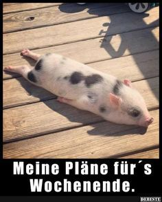 72 Of The Funny Animal Memes To Start The Week With A Smile My colleague's pig, Bacon seed, sun-bathing :))) Cute Little Animals, Cute Funny Animals, Funny Animal Pictures, Disney Pictures, Funny Animal Names, Baby Animals Super Cute, Disney Pics, Funny Disney, Cute Little Things