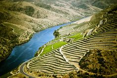 Douro terraced vineyards, UNESCO World Heritage, oldest Demarcated Wine Region in the world (home of Portwine) - Portugal