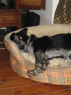 Poppy in her bed