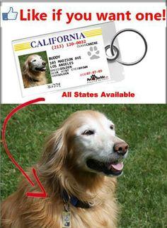 License plate dog id