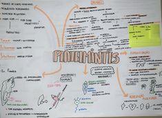 #platelmintes #zoologia #biologia #resumo