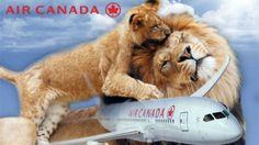Petition · Stop Safari Club International bullying Air Canada to reverse animal trophy transport ban · Change.org