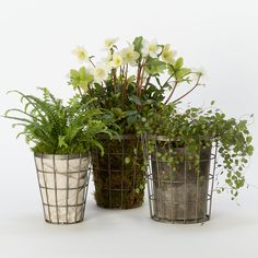 styling by melissa j. lowrie | Terrain Tapered Wire Pot, Medium #shopterrain