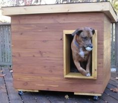 Argos - Connecticut:  several years of being tried and tested, this dog house has been proven to be the most comfortable and the safest home you can build for your beloved dog.