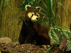 lego-world-2009-643-wild-animals