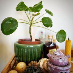 Air Plants, Indoor Plants, Easy House Plants, House Plant Care, Garden Care, Container Plants, Indoor Garden, Houseplants, Orchids