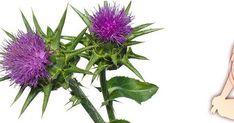 Εναλλακτικές προτάσεις Υγείας ,Διατροφής,Ψυχολογίας και θεραπευτικά βότανα Herbs, Plants, Blog, Herb, Blogging, Plant, Planets, Medicinal Plants