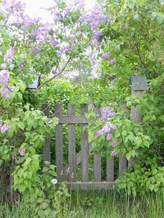 Jardim no campo.