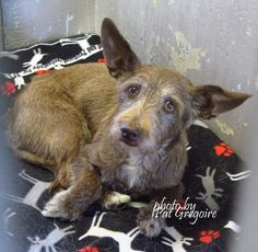 SAFE --- A4818903 I am a very friendly 6 yr old male brown Terrier mix. I came to the shelter as a stray on April 15. available 4/19/15 Baldwin Park shelter  https://www.facebook.com/photo.php?fbid=956066447738526&set=a.705235432821630&type=3&theater