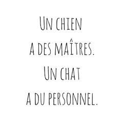 Quote - citation Chat/chien