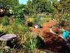 10 gardens prettier than a lawn, and more water efficient too, including this California front yard food forest