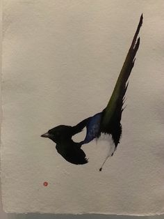 Magpie in watercolour. Japanese style