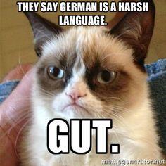 64 Best German Memes Images Fanny Pics Funny Images Hilarious