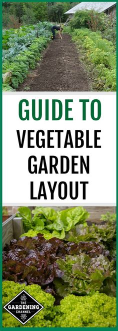 Follow this gardening guide to design your home vegetable garden. This guide covers everything from garden site selection to companion planting.