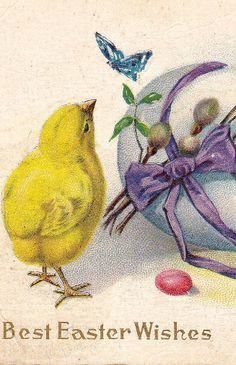 Easter chick & butterfly