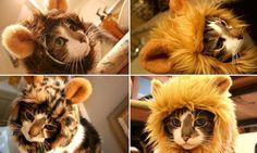 Шапка Лев для кота (Львиная грива для кошки) alliex.ru